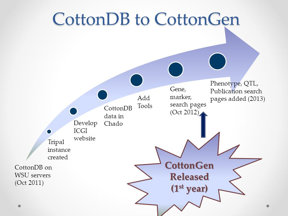 CottonGen Released (1 st year) CottonDB to CottonGen CottonDB on WSU servers (Oct 2011) Tripal instance created Develop ICGI website CottonDB data in Chado Add Tools Gene, marker, search pages (Oct 2012) Phenotype, QTL, Publication search pages added (2013)