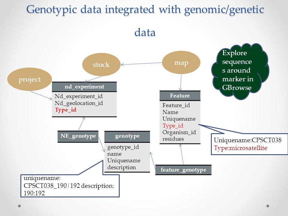 Genotypic data integrated with genomic/genetic data nd_experiment Nd_experiment_id Nd_geolocation_id Type_id genotype genotype_id name Uniquename desc