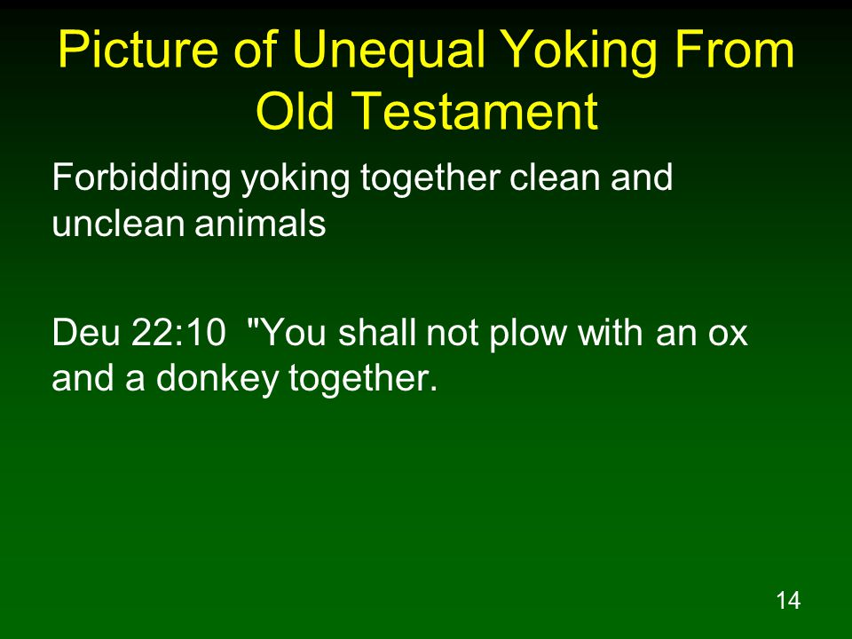 14 Picture of Unequal Yoking From Old Testament Forbidding yoking together clean and unclean animals Deu 22:10