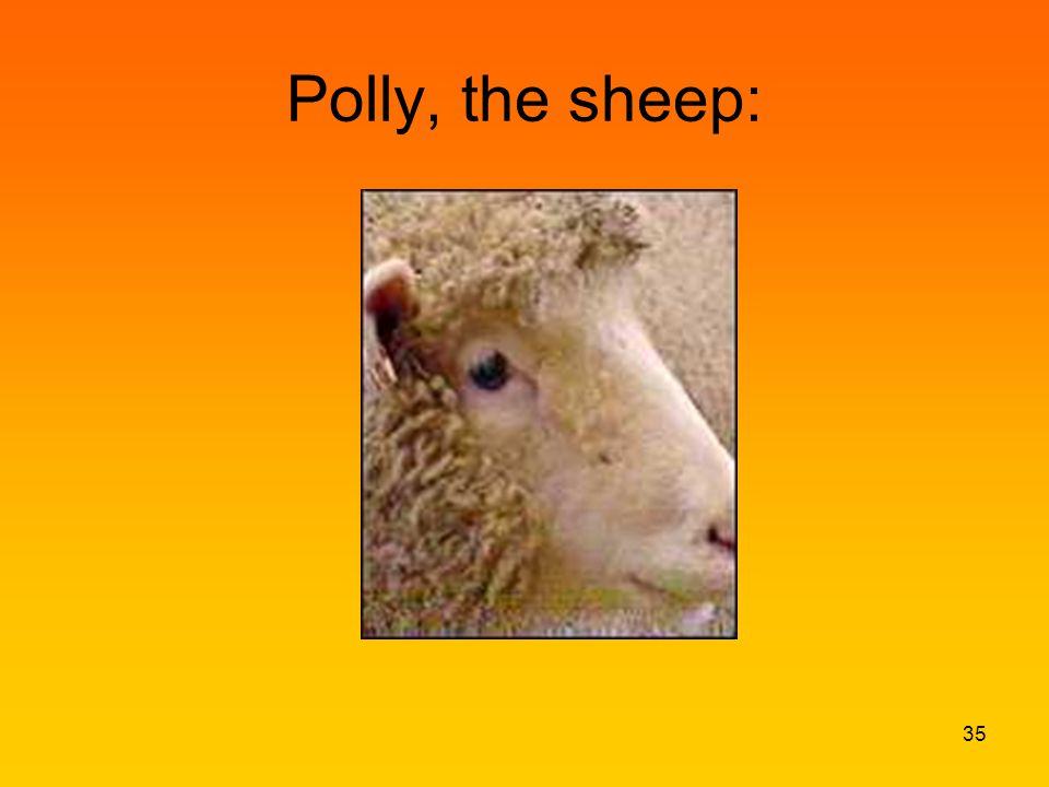 Polly, the sheep: 35