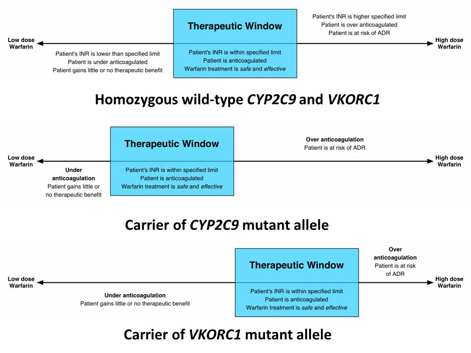 Homozygous wild-type CYP2C9 and VKORC1 Carrier of CYP2C9 mutant allele Carrier of VKORC1 mutant allele