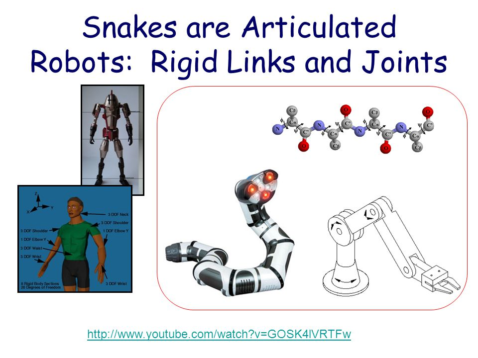 Snakes are Articulated Robots: Rigid Links and Joints http://www.youtube.com/watch?v=GOSK4lVRTFw