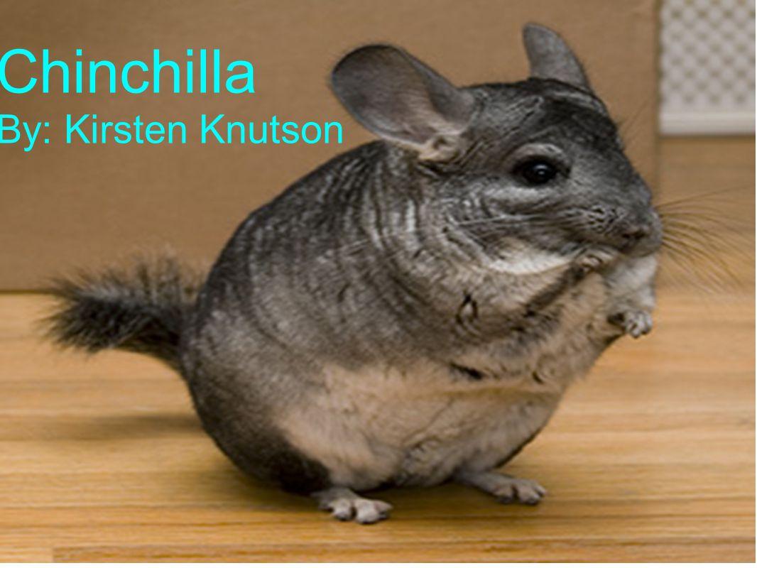 Chinchilla By: Kirsten Knutson Chinchilla By: Kirsten Knutson