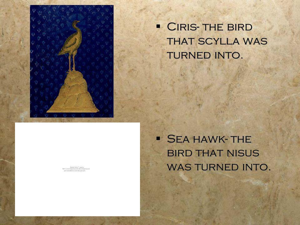  Ciris- the bird that scylla was turned into.  Sea hawk- the bird that nisus was turned into.