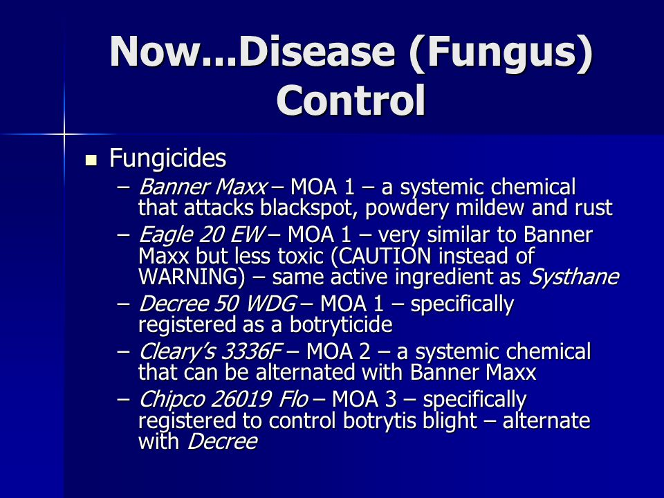 Now...Disease (Fungus) Control Fungicides Fungicides –Banner Maxx – MOA 1 – a systemic chemical that attacks blackspot, powdery mildew and rust –Eagle 20 EW – MOA 1 – very similar to Banner Maxx but less toxic (CAUTION instead of WARNING) – same active ingredient as Systhane –Decree 50 WDG – MOA 1 – specifically registered as a botryticide –Cleary's 3336F – MOA 2 – a systemic chemical that can be alternated with Banner Maxx –Chipco 26019 Flo – MOA 3 – specifically registered to control botrytis blight – alternate with Decree