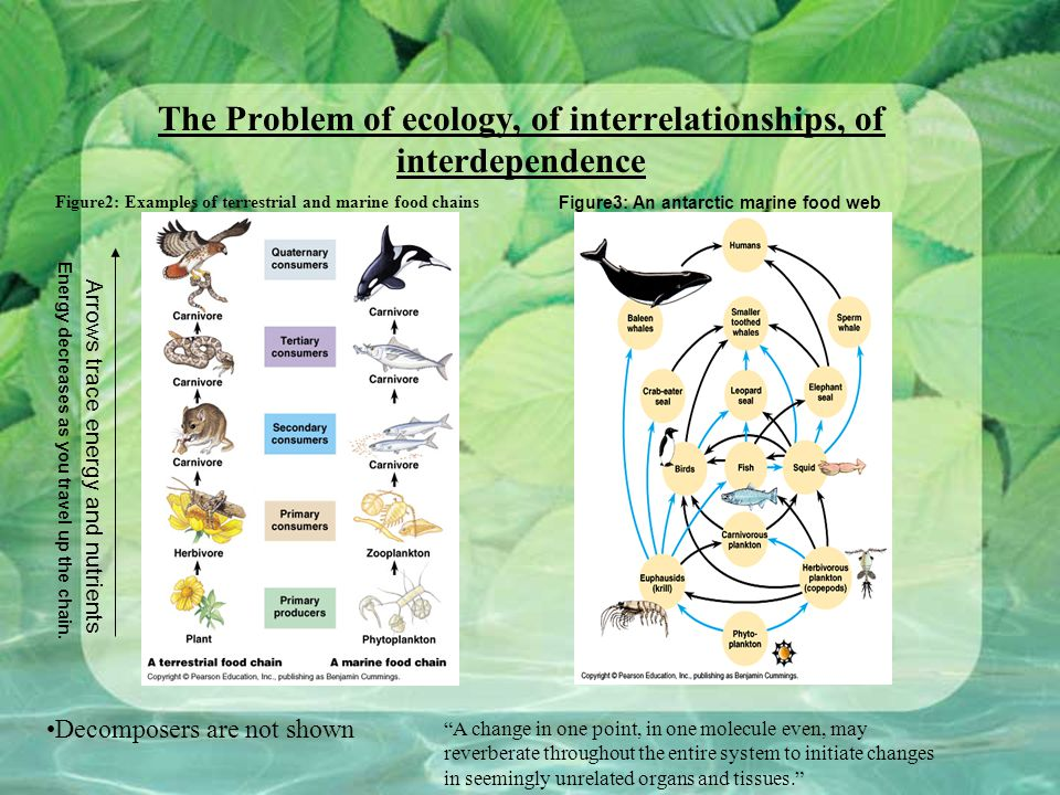 The Problem of ecology, of interrelationships, of interdependence Figure2: Examples of terrestrial and marine food chains Figure3: An antarctic marine food web Decomposers are not shown Arrows trace energy and nutrients A change in one point, in one molecule even, may reverberate throughout the entire system to initiate changes in seemingly unrelated organs and tissues. Energy decreases as you travel up the chain.