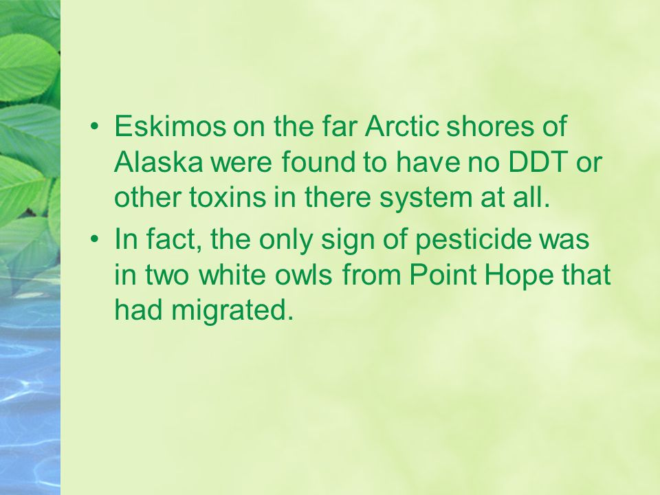 Eskimos on the far Arctic shores of Alaska were found to have no DDT or other toxins in there system at all.