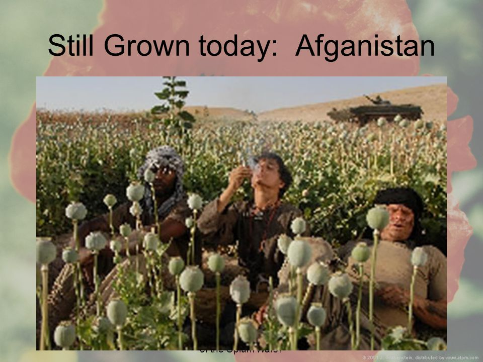 Aim: What were the implications of the Opium Wars Still Grown today: Afganistan