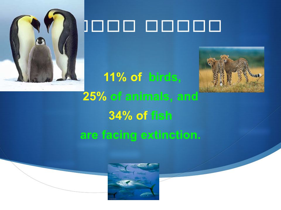 Quick Facts 11% of birds, 25% of animals, and 34% of fish are facing extinction.