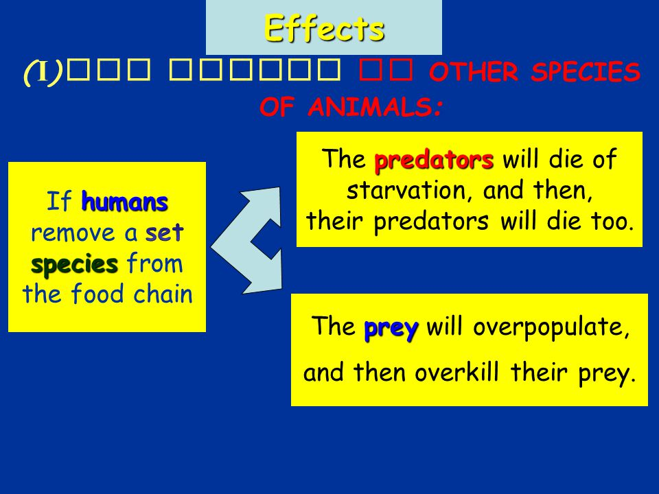 Effects (I)The effect on OTHER SPECIES OF ANIMALS : The p pp prey will overpopulate, and then overkill their prey.
