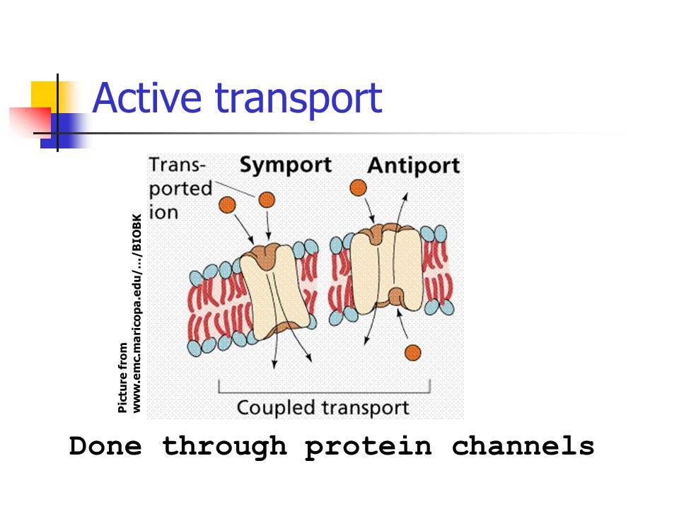 Active transport Done through protein channels Picture from www.emc.maricopa.edu/…/BIOBK