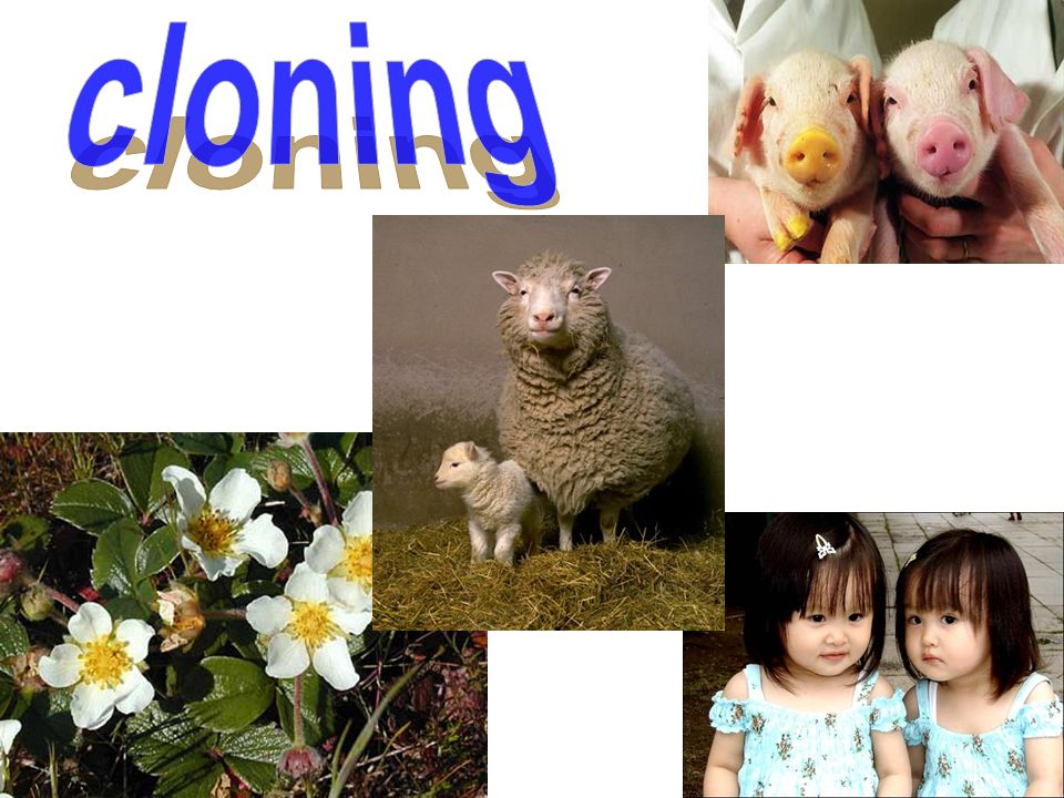 ◆ What are the major two uses of cloning.