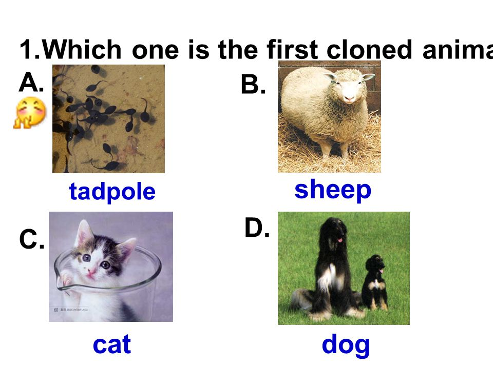 1.Which one is the first cloned animal? A. tadpole B. sheep C. cat D. dog