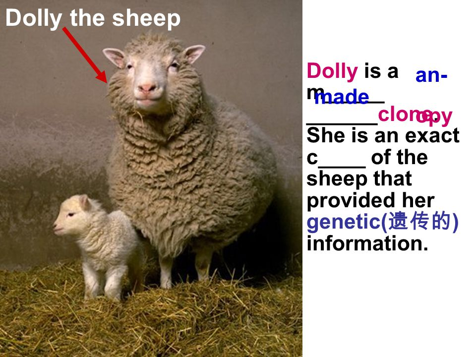 Dolly the sheep Dolly is a m_____ ______clone.