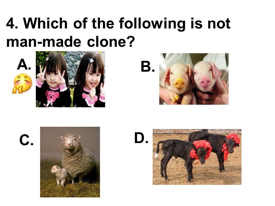 4. Which of the following is not man-made clone A. B. C. D.