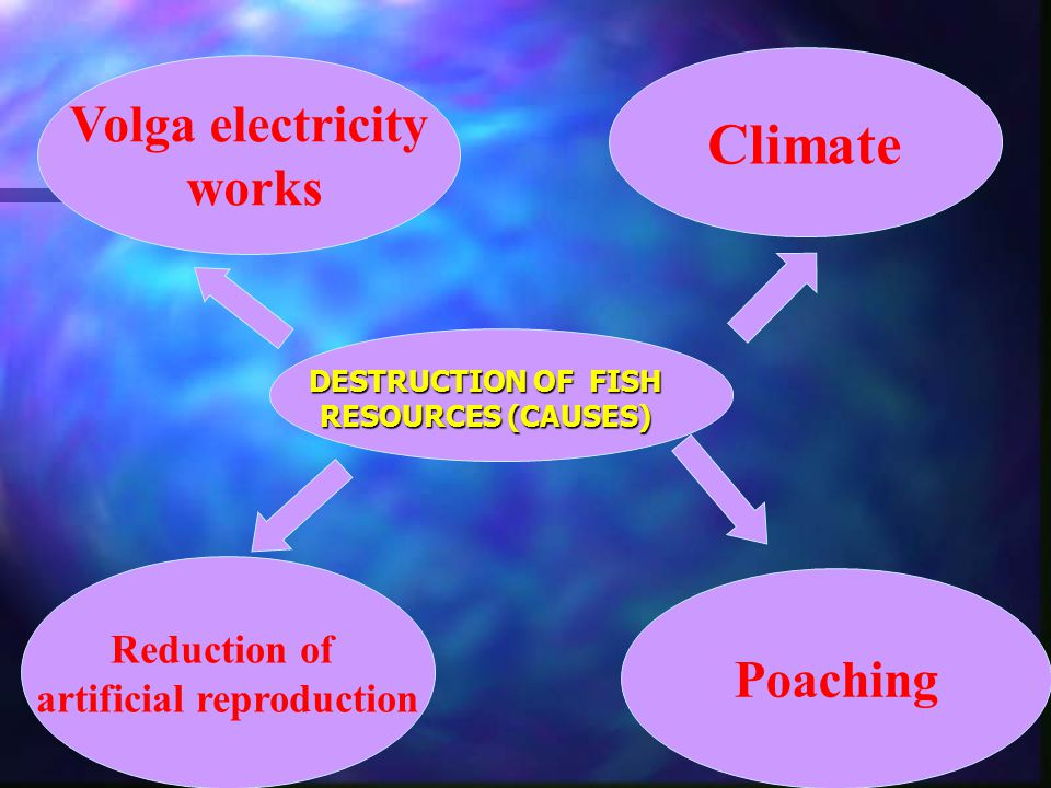 DESTRUCTION OF FISH RESOURCES (CAUSES) Volga electricity works Reduction of artificial reproduction Poaching Climate