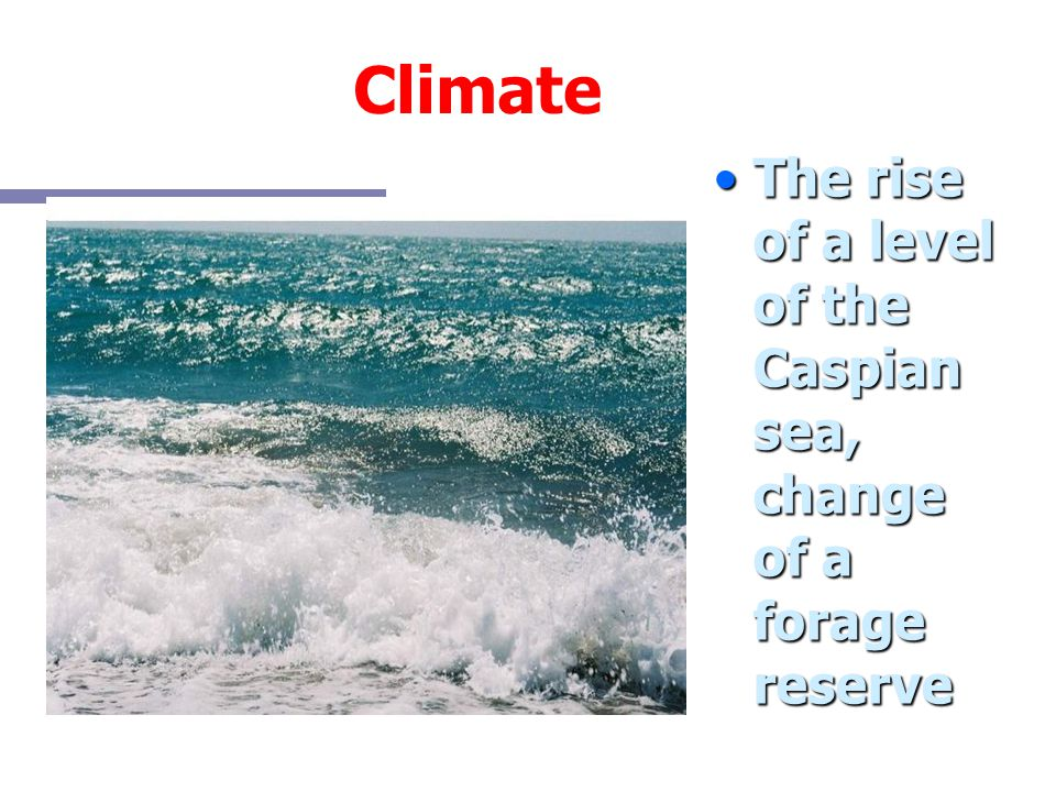Climate The rise of a level of the Caspian sea, change of a forage reserve