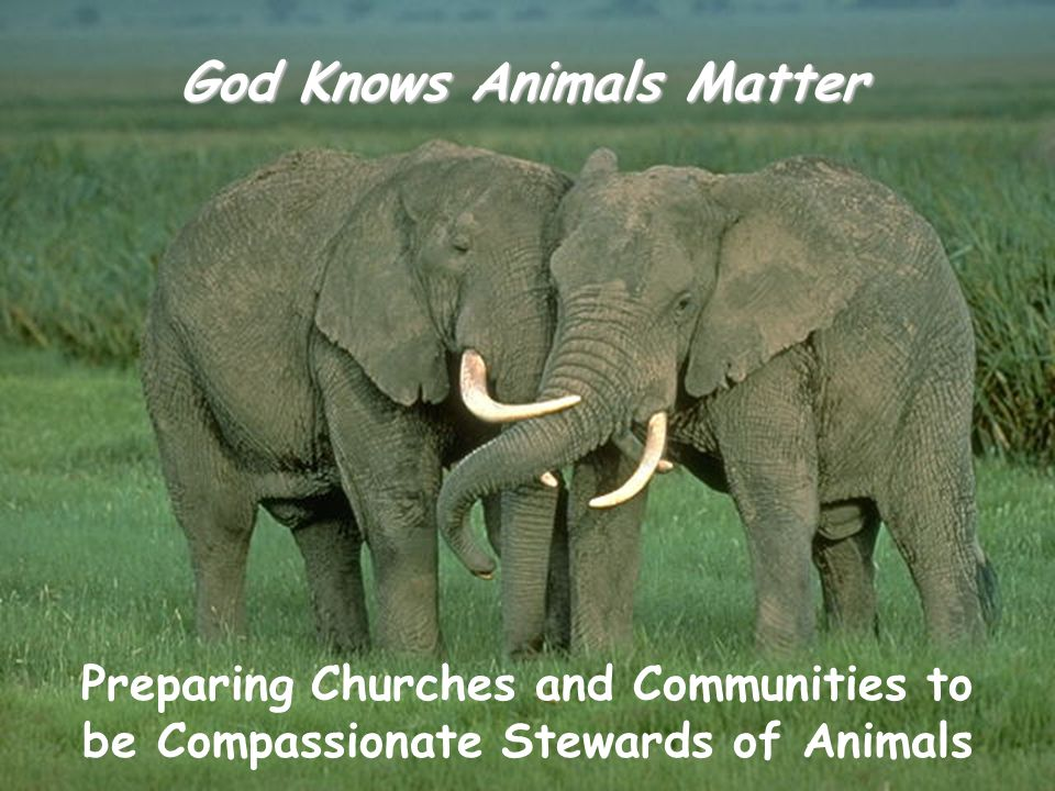 God Knows Animals Matter Preparing Churches and Communities to be Compassionate Stewards of Animals