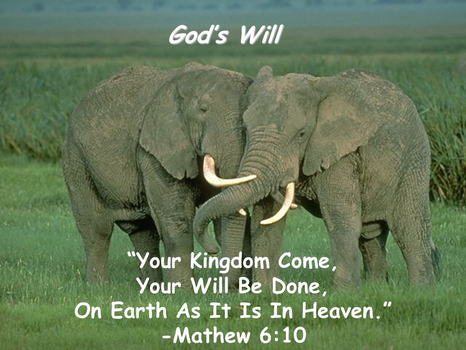 "God's Will ""Your Kingdom Come, Your Will Be Done, On Earth As It Is In Heaven."" -Mathew 6:10"