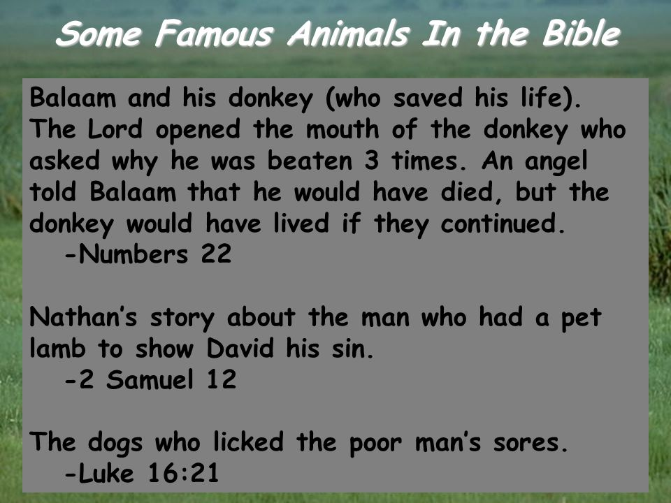 Some Famous Animals In the Bible Balaam and his donkey (who saved his life). The Lord opened the mouth of the donkey who asked why he was beaten 3 tim