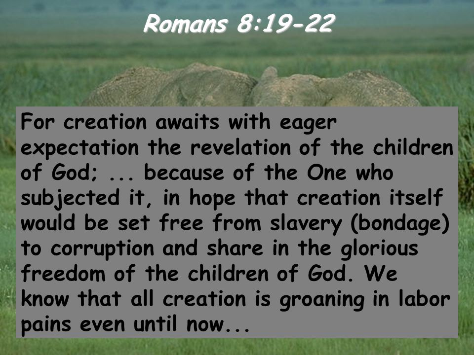 Romans 8:19-22 For creation awaits with eager expectation the revelation of the children of God;... because of the One who subjected it, in hope that