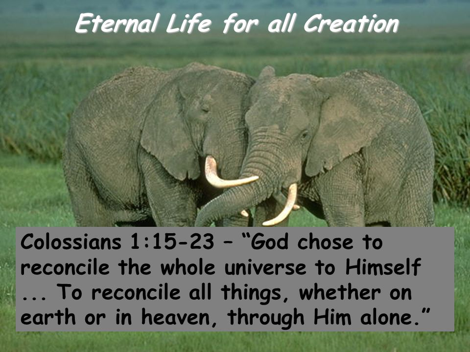 "Eternal Life for all Creation Colossians 1:15-23 – ""God chose to reconcile the whole universe to Himself... To reconcile all things, whether on earth"