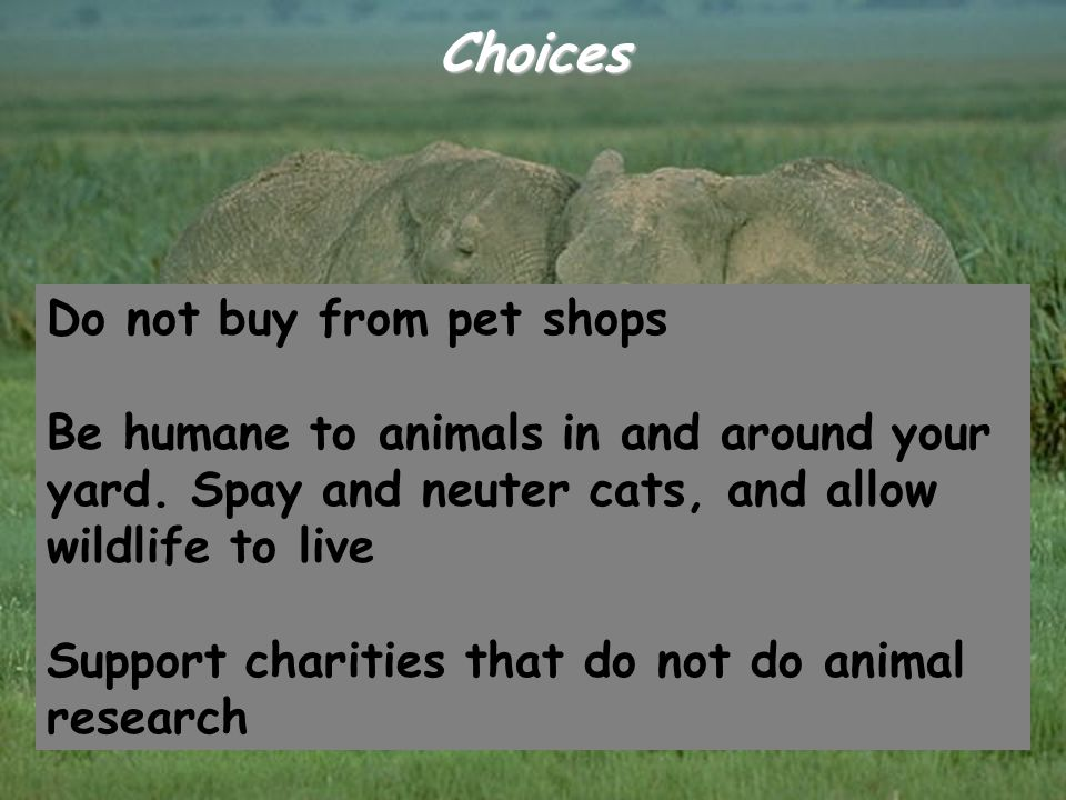 Choices Do not buy from pet shops Be humane to animals in and around your yard. Spay and neuter cats, and allow wildlife to live Support charities tha