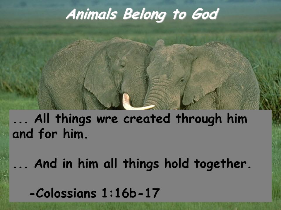 Genesis 9:2 Dread fear of you shall come upon all the animals of the earth and all the birds of the air, upon all the creatures that move about on the ground and all the fishes of the sea into your power they are delivered.