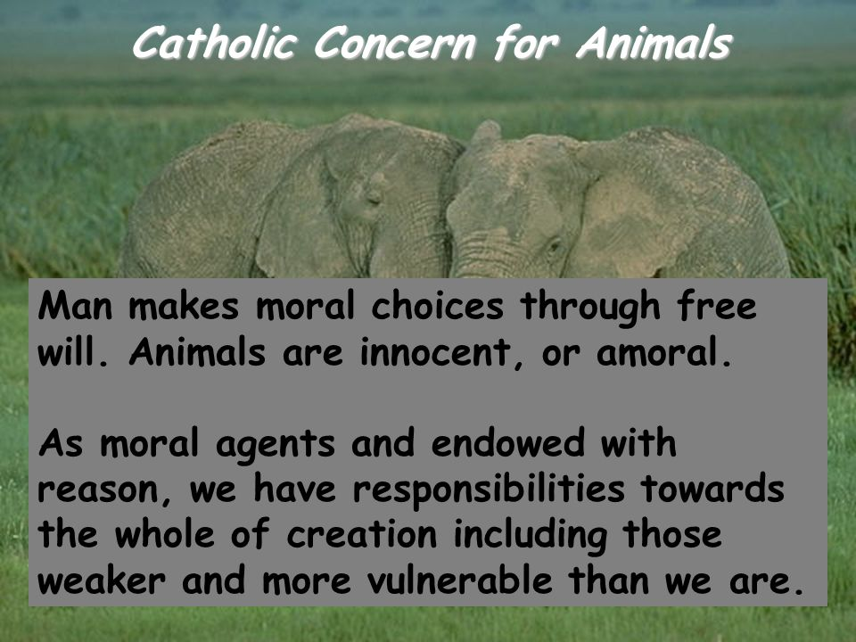 Catholic Concern for Animals Man makes moral choices through free will. Animals are innocent, or amoral. As moral agents and endowed with reason, we h
