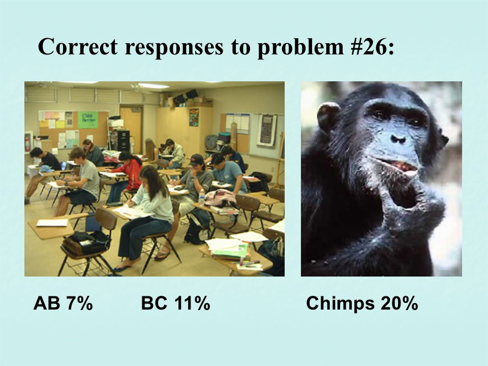 Correct responses to problem #26: AB 7% BC 11%Chimps 20%