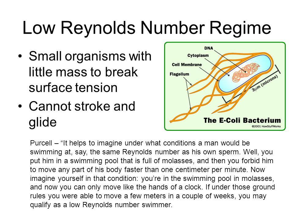 High Reynolds Number Turbulent, irreversible flow Fast forward pushes dominate slow backwards pushes http://www2.icfd.co.jp/menu1/highreynolds/highre.html