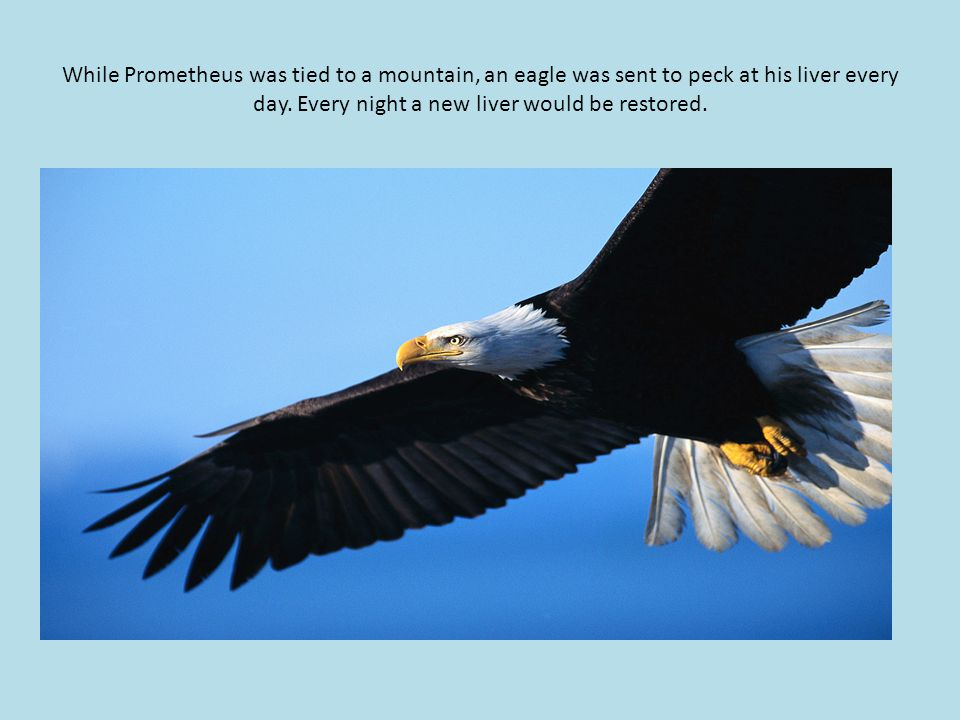 While Prometheus was tied to a mountain, an eagle was sent to peck at his liver every day.