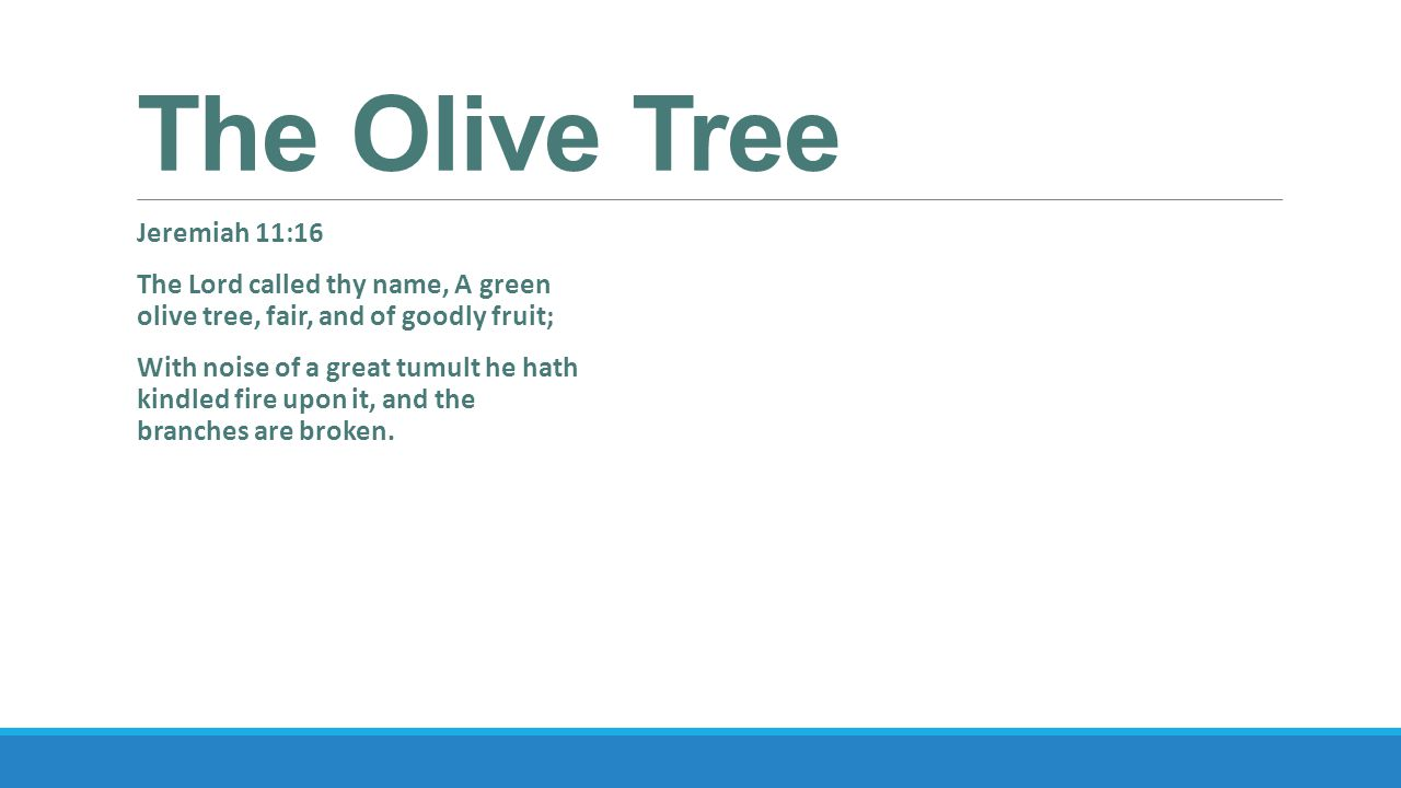 The Olive Tree Jeremiah 11:16 The Lord called thy name, A green olive tree, fair, and of goodly fruit; With noise of a great tumult he hath kindled fire upon it, and the branches are broken.