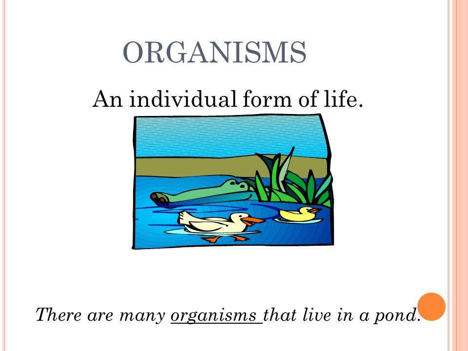 ORGANISMS An individual form of life. There are many organisms that live in a pond.