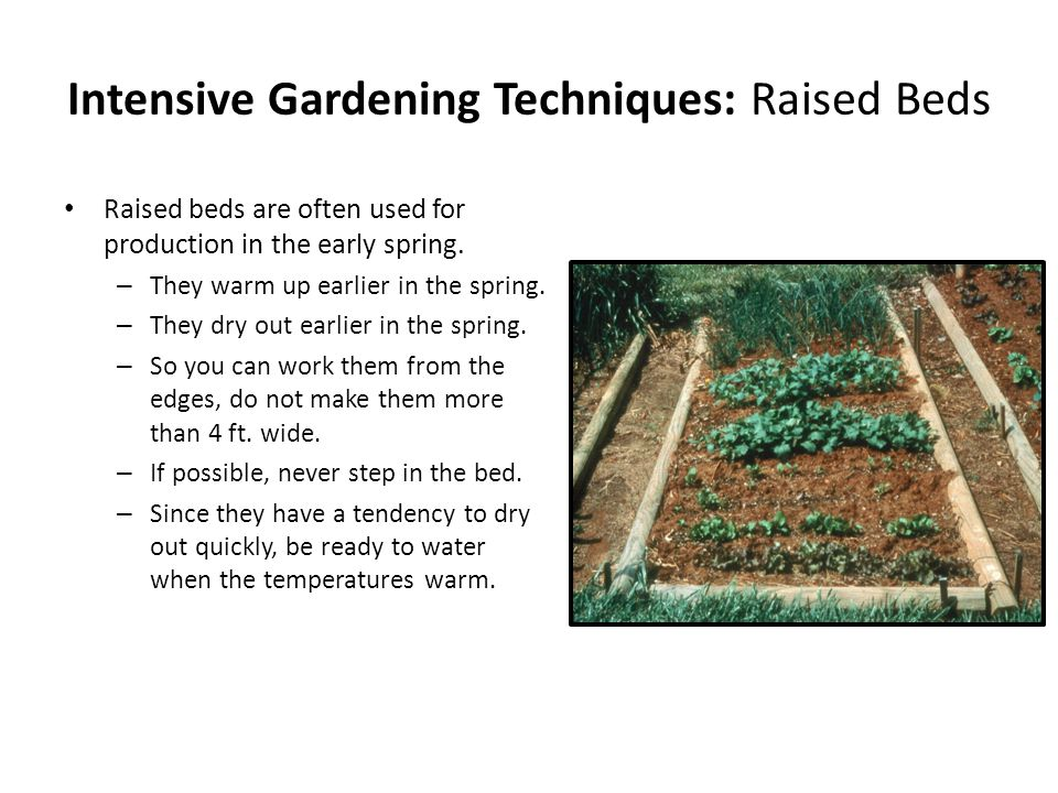 Intensive Gardening Techniques: Raised Beds Raised beds are often used for production in the early spring.