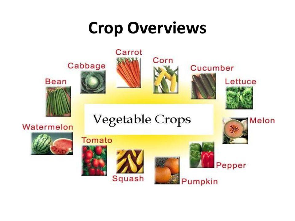 Crop Overviews