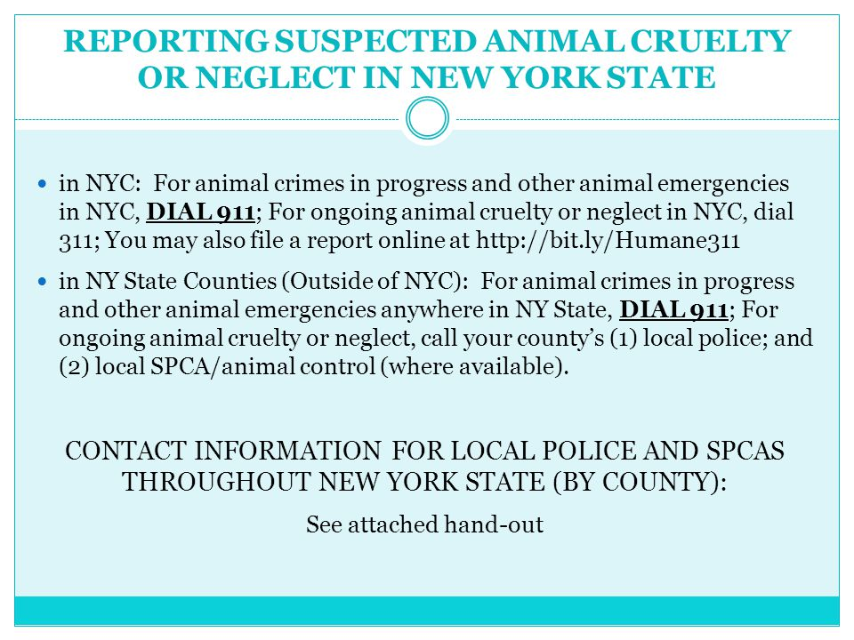 REPORTING SUSPECTED ANIMAL CRUELTY OR NEGLECT IN NEW YORK STATE in NYC: For animal crimes in progress and other animal emergencies in NYC, DIAL 911; For ongoing animal cruelty or neglect in NYC, dial 311; You may also file a report online at http://bit.ly/Humane311 in NY State Counties (Outside of NYC): For animal crimes in progress and other animal emergencies anywhere in NY State, DIAL 911; For ongoing animal cruelty or neglect, call your county's (1) local police; and (2) local SPCA/animal control (where available).