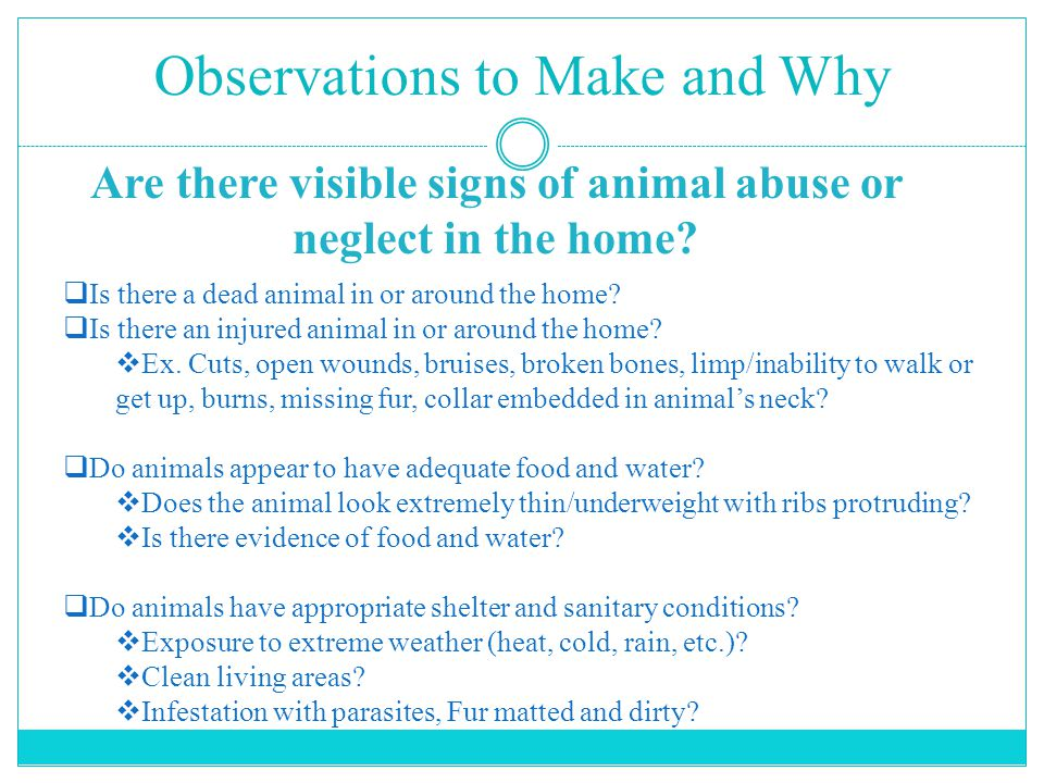 Observations to Make and Why Are there visible signs of animal abuse or neglect in the home.