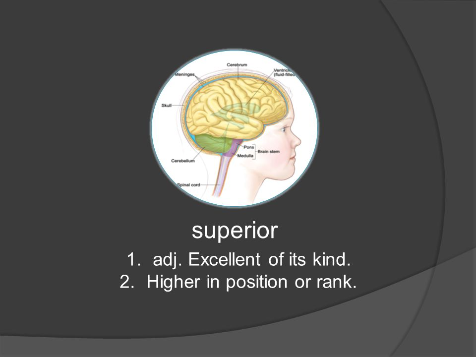 superior 1.adj. Excellent of its kind. 2.Higher in position or rank.