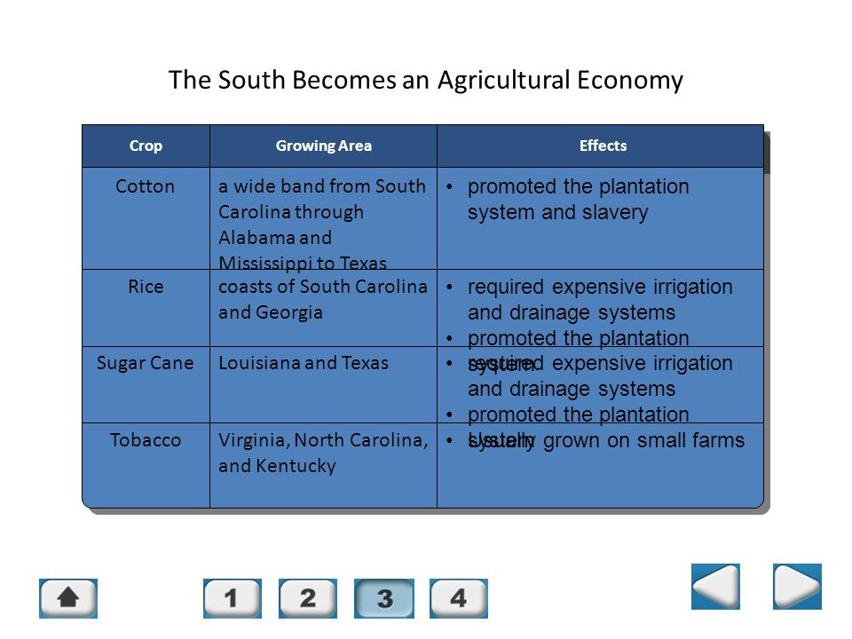 Chapter 14, Section 3 The South Becomes an Agricultural Economy CropGrowing AreaEffects Cottona wide band from South Carolina through Alabama and Miss