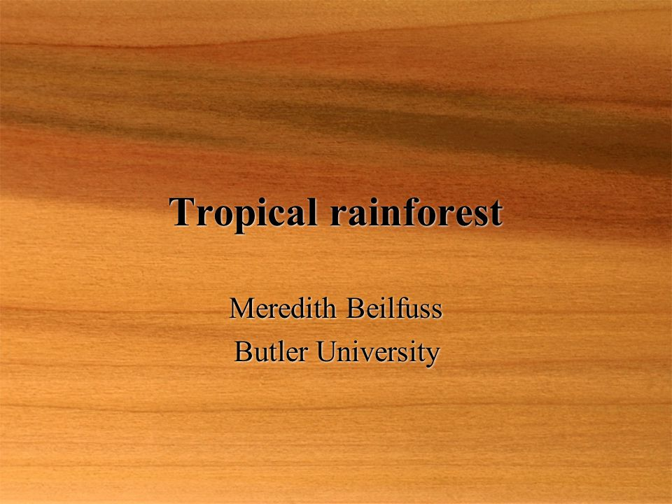 Tropical rainforest Meredith Beilfuss Butler University Meredith Beilfuss Butler University