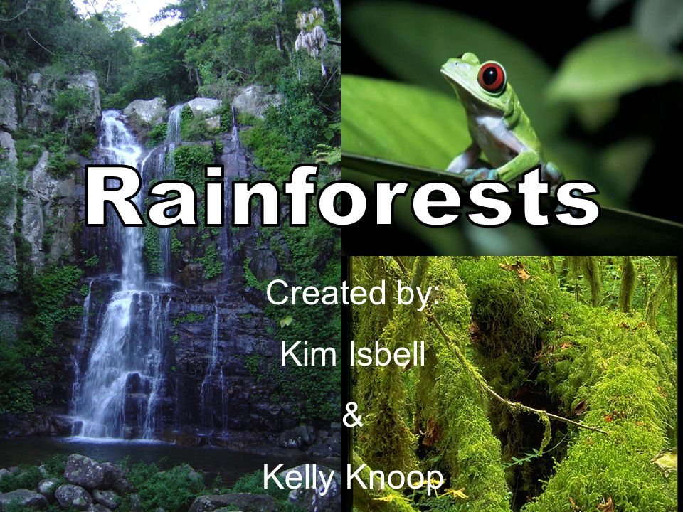 ANSWER Rainforest Trivia Rainforests are found in Africa, Asia, Australia, and Central and South America.