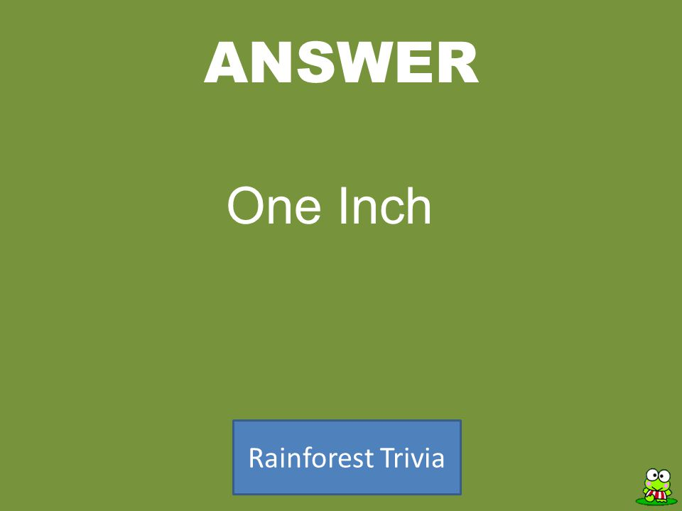 ANSWER Rainforest Trivia One Inch