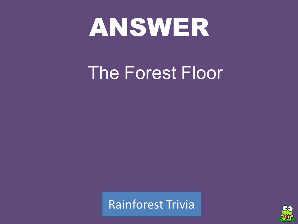 ANSWER Rainforest Trivia The Forest Floor