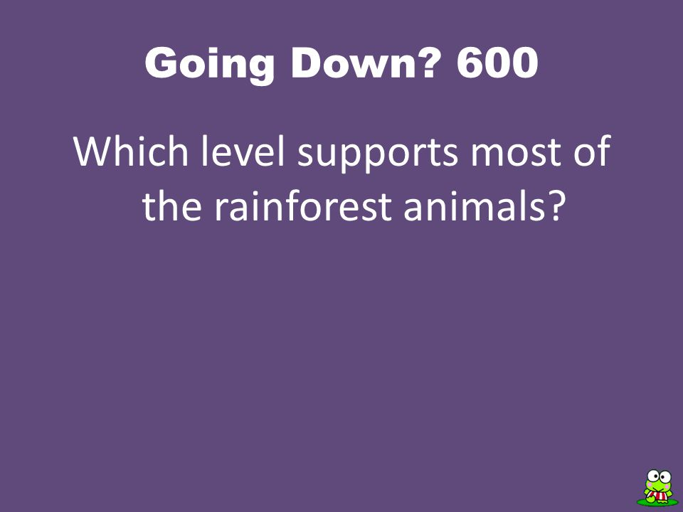 Going Down 600 Which level supports most of the rainforest animals