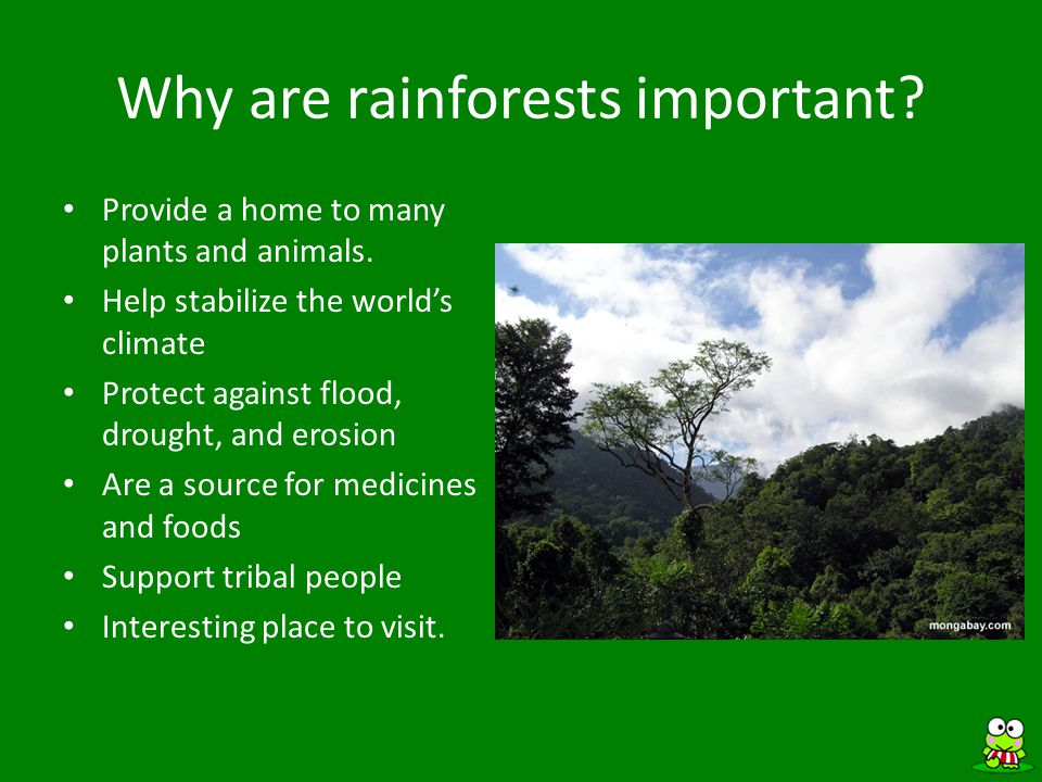 Rainforests are being destroyed.