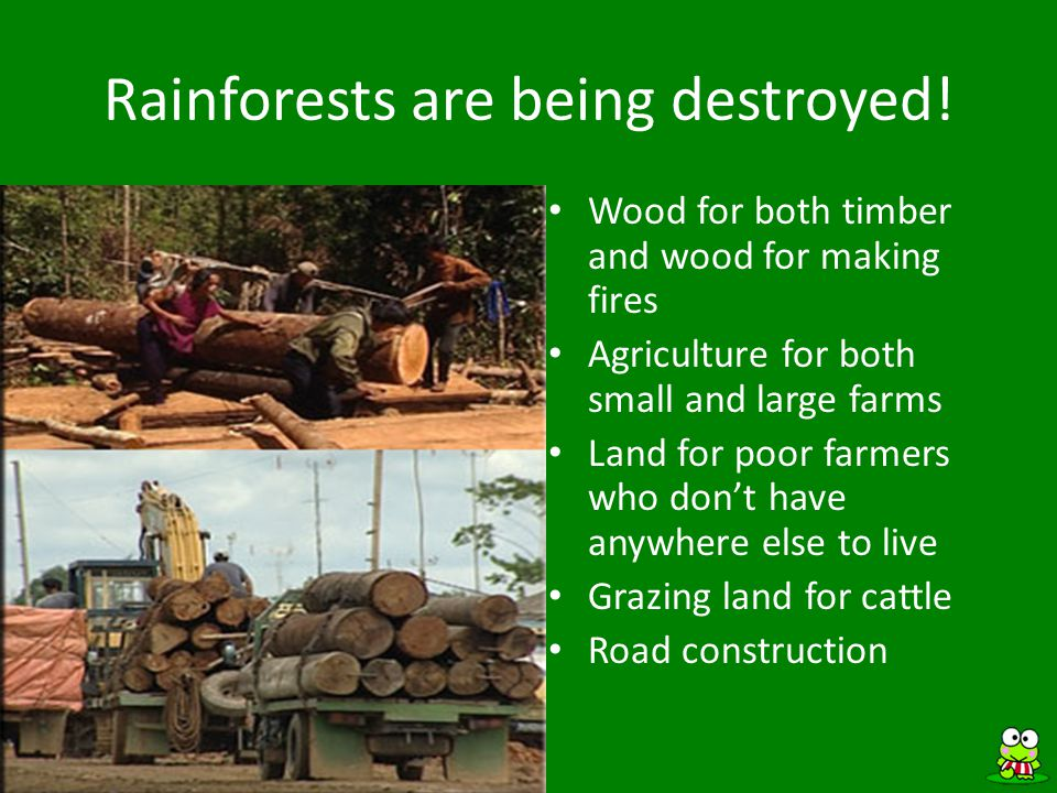 ANSWER Rainforest Trivia In this picture, rainforest have been destroyed for agricultural purposes.