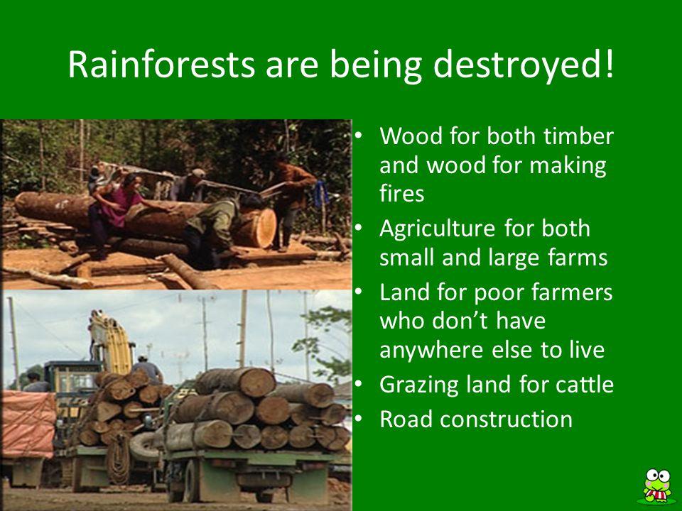 ANSWER Rainforest Trivia The Emergent Level