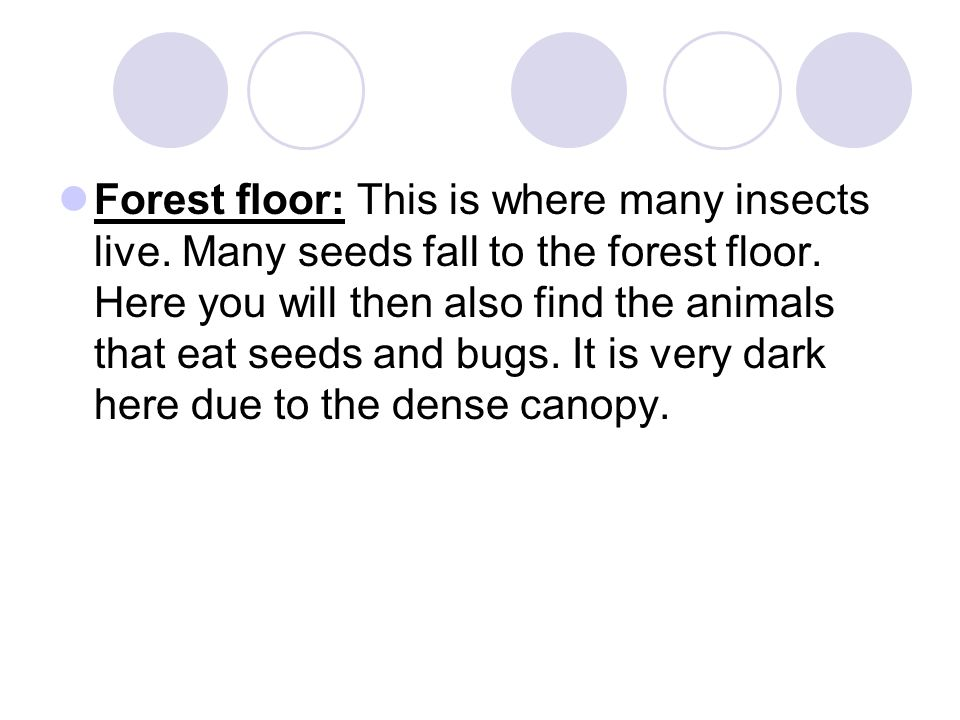 Forest floor: This is where many insects live. Many seeds fall to the forest floor. Here you will then also find the animals that eat seeds and bugs.