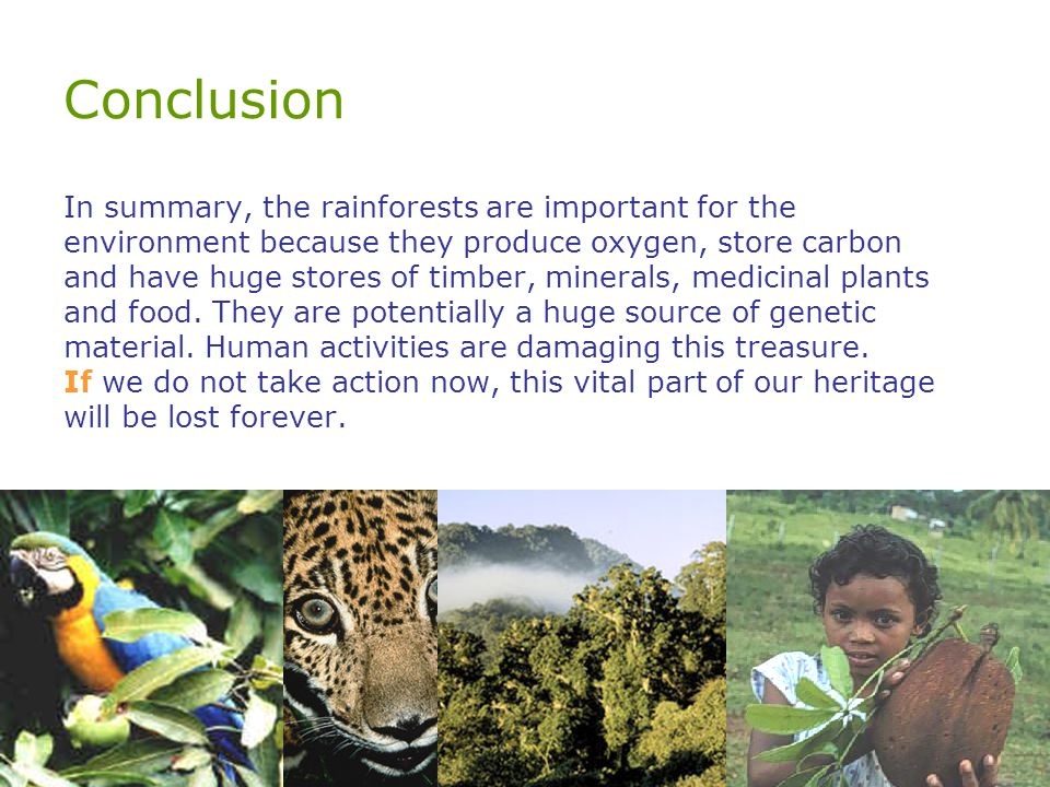 Conclusion In summary, the rainforests are important for the environment because they produce oxygen, store carbon and have huge stores of timber, minerals, medicinal plants and food.